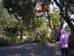 Reaksi Cepat Tanggap Darurat Pemangkasan Pohon Dinas PUPR Jombang